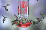 The Best 1 Hummingbird Feeder is a bottle style that's easy to clean with a bottle brush