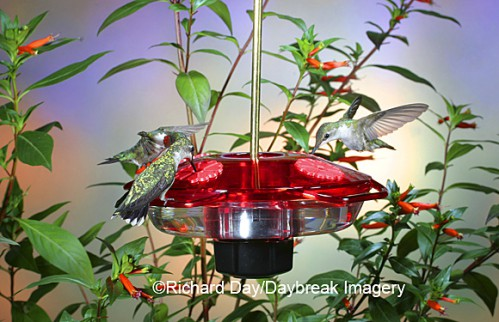 Droll Yankees Little Flyer 2 basin or saucer style feeder. A little more expensive but all feeders come with a lifetime guarantee. Those model can be hung from a hook or mounted on a pole (see black fitting on bottom of feeder)