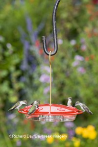 HummZinger Excel saucer style feeder by Aspects. 2-pieces that snap apart and are very easy to clean.